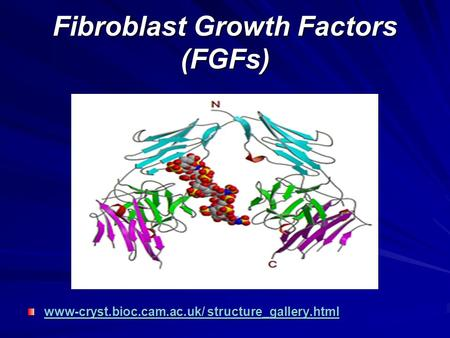 Fibroblast Growth Factors (FGFs) www-cryst.bioc.cam.ac.uk/ structure_gallery.html www-cryst.bioc.cam.ac.uk/ structure_gallery.html.