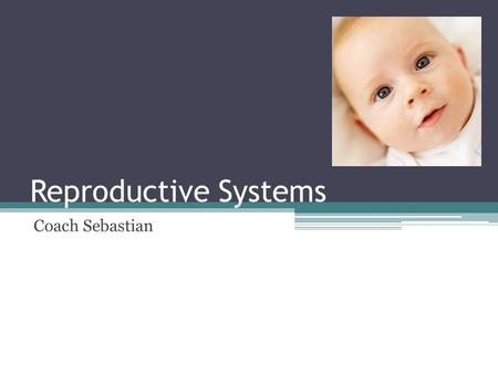 Reproductive Systems Coach Sebastian. Male Reproductive System: Objectives State the role of the male reproductive system Describe the function of each.