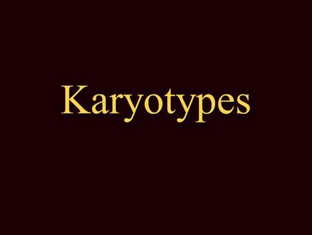 Karyotypes Karyotype = A display (picture) of all the chromosomes in the nucleus of a cell. A display (picture) of all the chromosomes in the nucleus.