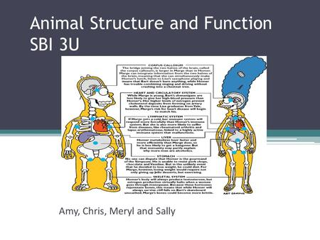 Animal Structure and Function SBI 3U Amy, Chris, Meryl and Sally.