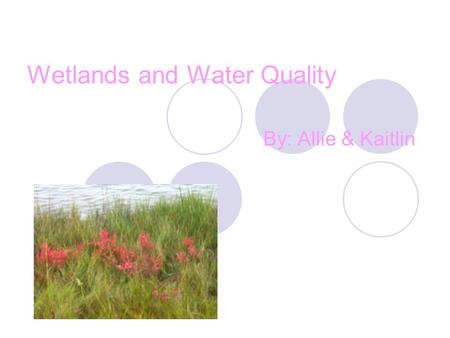 Wetlands and Water Quality By: Allie & Kaitlin. Wetlands Wetlands are important because that's where the animals and plants live. If we didn't have the.