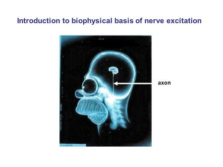 Introduction to biophysical basis of nerve excitation axon.