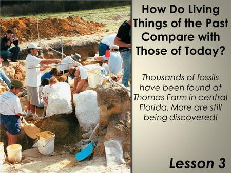 How Do Living Things of the Past Compare with Those of Today? Thousands of fossils have been found at Thomas Farm in central Florida. More are still being.