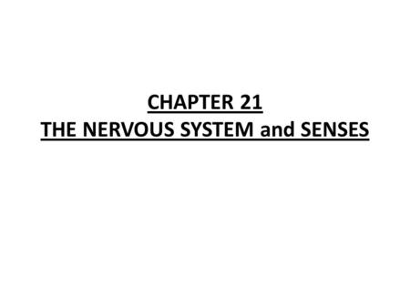 CHAPTER 21 THE NERVOUS SYSTEM and SENSES Homeostasis-maintaining a constant internal balance; responding to stimuli Stimuli- an external or internal.