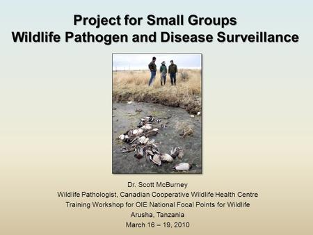 Project for Small Groups Wildlife Pathogen and Disease Surveillance Dr. Scott McBurney Wildlife Pathologist, Canadian Cooperative Wildlife Health Centre.
