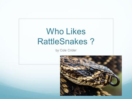 Who Likes RattleSnakes ? by Cole Crider Interactions with Other Plants and Animals They eat small animals like, rabbits and mice. They are prey to kingsnake,