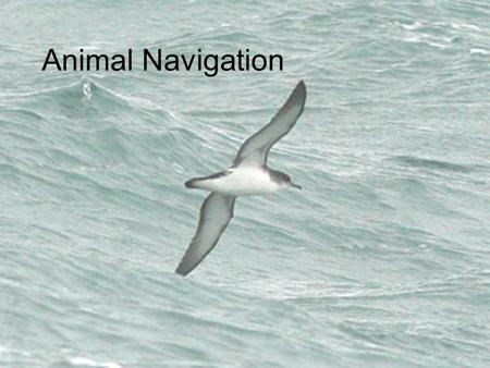 Animal Navigation. Point toward your home ?? ? ?