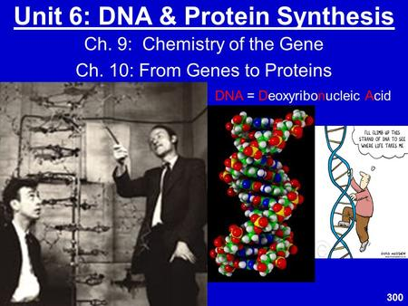 Unit 6: DNA & Protein Synthesis Ch. 9: Chemistry of the Gene Ch. 10: From Genes to Proteins DNA = Deoxyribonucleic Acid 300.