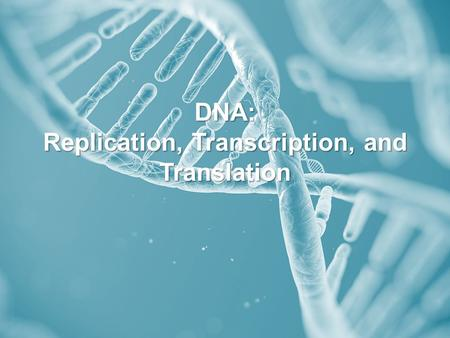 DNA: Replication, Transcription, and Translation.