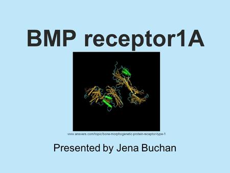 BMP receptor1A Presented by Jena Buchan www.answers.com/topic/bone-morphogenetic-protein-receptor-type-1.