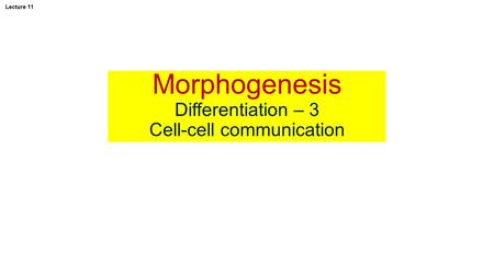 Morphogenesis Differentiation – 3 Cell-cell communication