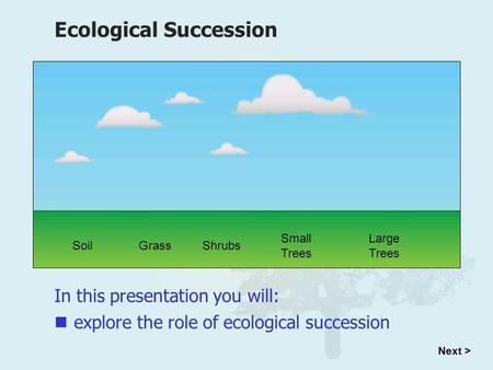In this presentation you will: Ecological Succession explore the role of ecological succession Next > SoilGrassShrubs Small Trees Large Trees.