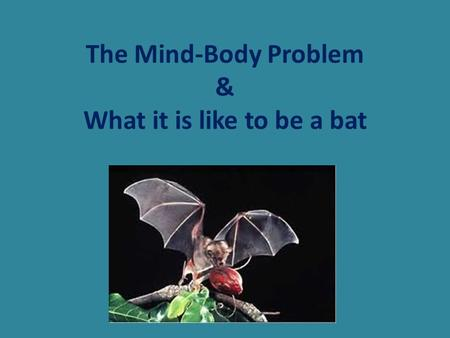 The Mind-Body Problem & What it is like to be a bat.
