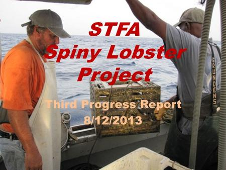 STFA Spiny Lobster Project Third Progress Report 8/12/2013.
