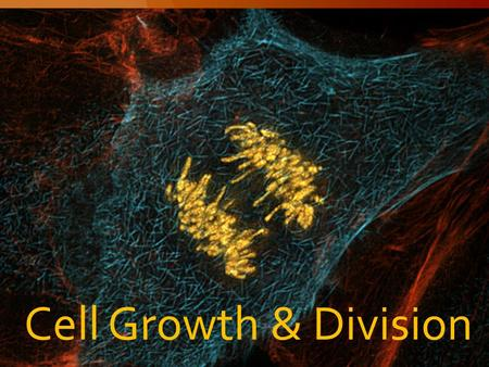 Cell Growth & Division. Limits to cell growth 10-1 Cell Growth.