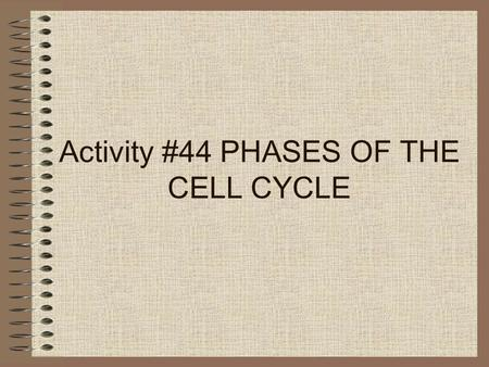Activity #44 PHASES OF THE CELL CYCLE. 6 Phases of the Cell Cycle 1.Interphase 2.Prophase 3.Metaphase 4.Anaphase 5.Telophase 6.Cytokinesis.