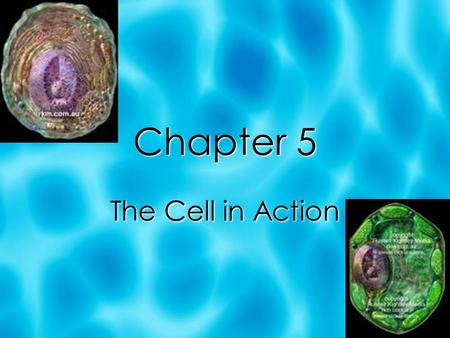 Chapter 5 The Cell in Action. Section 1: Exchange with the Environment  A cell must be able to obtain energy and raw materials and get rid of wastes.