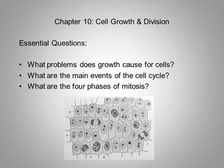 Chapter 10: Cell Growth & Division Essential Questions: What problems does growth cause for cells? What are the main events of the cell cycle? What are.
