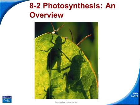 Slide 1 of 28 Copyright Pearson Prentice Hall 8-2 Photosynthesis: An Overview.