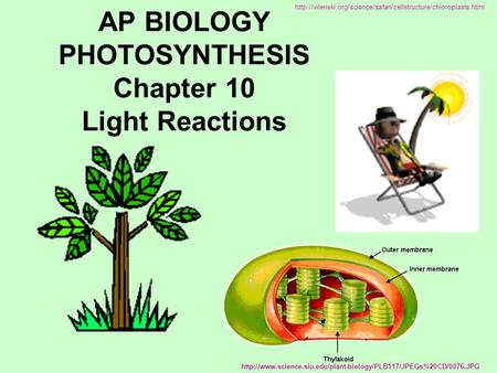 AP BIOLOGY PHOTOSYNTHESIS Chapter 10 Light Reactions