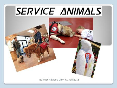 By Peer Advisor, Liam R., Fall 2015. What is a Service Animal? Service animals are animals that are trained to assist people with disabilities; they provide.