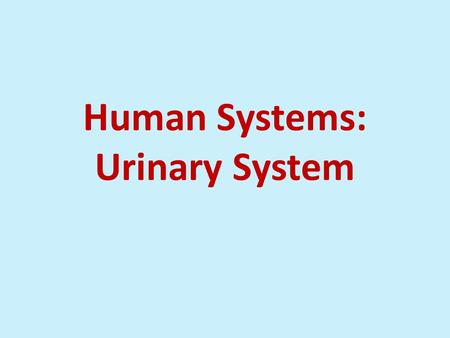 Human Systems: Urinary System. Urinary System Plays role in excretion of wastes (CO 2 and ammonia as a result of chemical activities).