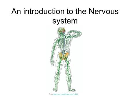 An introduction to the Nervous system From: