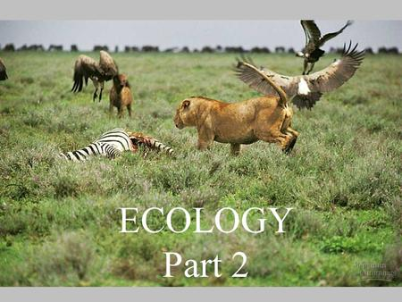 "ECOLOGY Part 2. What is ""Ecology""? The study of biological organization ""at <strong>and</strong> above the level of the organism"". (one definition) What are ""levels of."