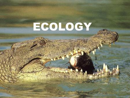 ECOLOGY. Ecology The study of interactions among organisms (biotic factors) and their environment (abiotic factors)