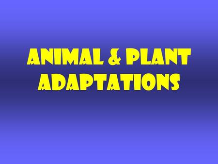 Animal & Plant adaptations. What is Adaptation? TRAITS that help organisms meet their basic needs and SURVIVE in their SURROUNDINGS. Plants and Animals.