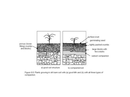 Figure 6.6. Plants growing in silt loam soil with (a) good tilth and (b) with all three types of compaction. a) good soil structure b) compacted soil porous.