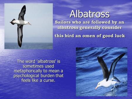 Albatross Sailors who are followed by an albatross generally consider this bird an omen of good luck The word 'albatross' is sometimes used metaphorically.