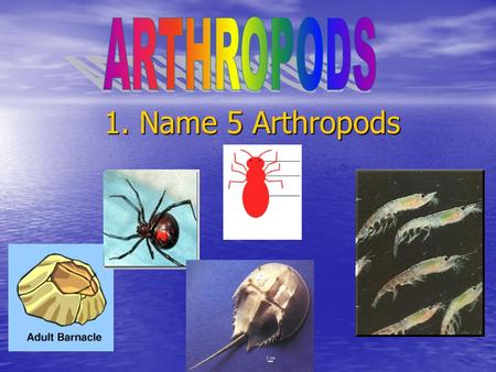 1. Name 5 Arthropods. Arthropods and Echinoderms 2. Without opening your book: Name two ways they are alike. Name two ways they are alike. Name three.