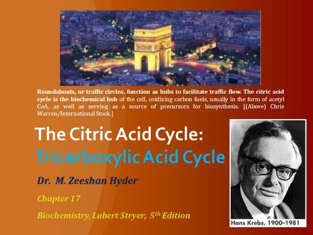 The Citric Acid Cycle: Tricarboxylic Acid Cycle Dr. M. Zeeshan Hyder Chapter 17 Biochemistry, Lubert Stryer, 5 th Edition Roundabouts, or traffic circles,