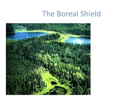 The Boreal Shield. Glossary Terms! Muskeg Taiga Timberland.
