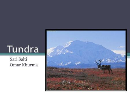 Sari Salti Omar Khurma. What is a Tundra? A Tundra is a biome characterized by low temperatures and minimal tree growth. The word Tundra usually only.