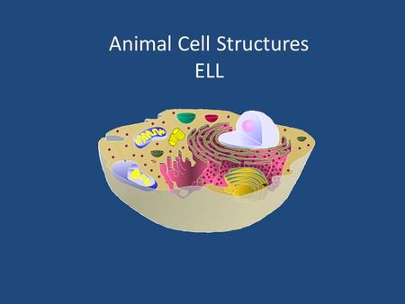 Animal Cell Structures ELL. Animal Cell Structures 1.Contractile Vacuole2. Cilium (Cilia) 3. Centrioles4. Vesicles A Small sacs that move molecules around.
