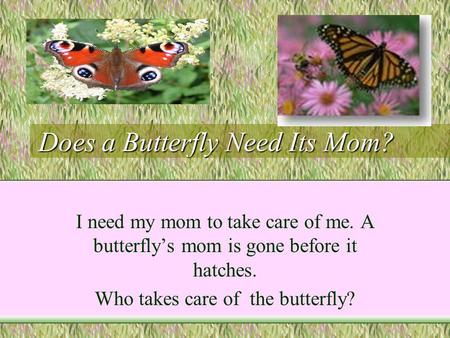 Does a Butterfly Need Its Mom? I need my mom to take care of me. A butterfly's mom is gone before it hatches. Who takes care of the butterfly?
