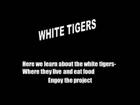 Here we learn about the white tigers- Where they live and eat food Engoy the project.