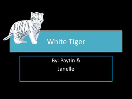 White Tiger By: Paytin & Janelle By: Paytin & Janelle.