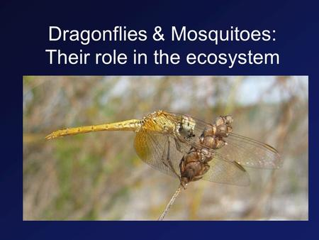 Dragonflies & Mosquitoes: Their role in the ecosystem.