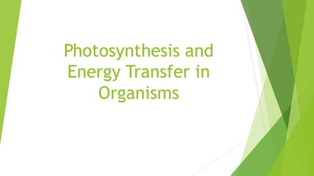 Photosynthesis and Energy Transfer in Organisms