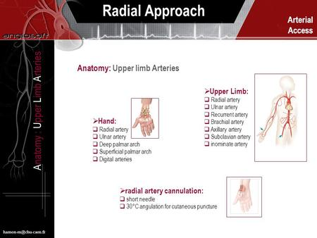 Arterial Access Radial Approach Anatomy : Upper Limb Arteries  Hand:  Radial artery  Ulnar artery  Deep palmar arch  Superficial.