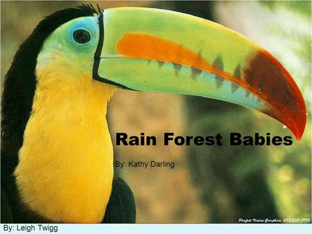 By: Leigh Twigg Rain Forest Babies By: Kathy Darling.