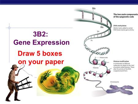 AP Biology 3B2: Gene Expression Draw 5 boxes on your paper.