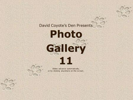 David Coyote's Den Presents Photo Gallery 11 Slides advance automatically, or by clicking anywhere on the screen.