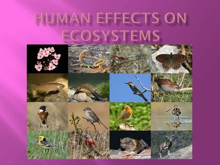  Human use of ecosystems:  Humans have decreased biodiversity of ecosystems at a very fast rate.