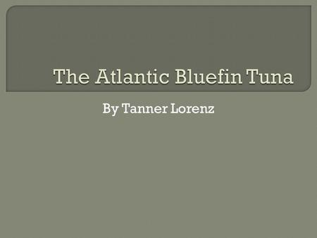 By Tanner Lorenz.  The description of the bluefin is it is sleek gray and can weight up to 1,000 lbs. When the female bluefin tuna matures at age 8 it.
