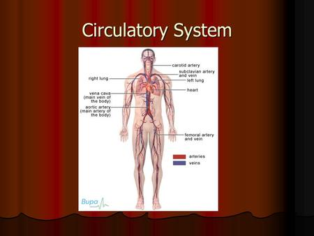 Circulatory System. Introduction Imagine turning on a faucet. What happens? Imagine turning on a faucet. What happens? Just as you expect water to flow.