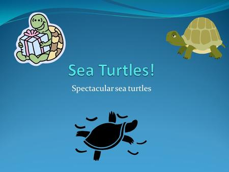 Spectacular sea turtles. Introduction Do you like turtles? I do. I bet you will too. I picked this animal because I didn't know a lot about sea turtles.
